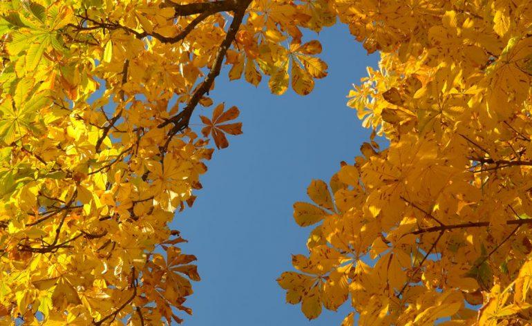 duvet tips for autumn